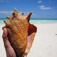 big seashell!